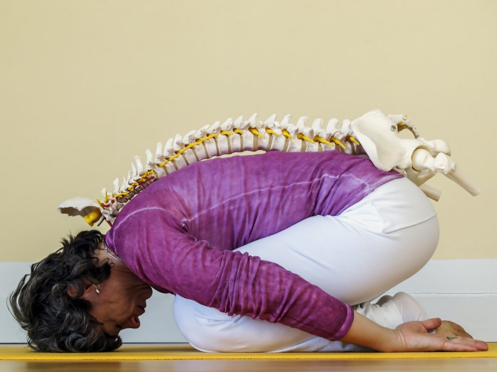 image of a woman stretching with a model spine placed on her back